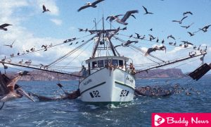 Controversy Raised Around Trawl Fishing Prohibition In Costa Rica ebuddynews
