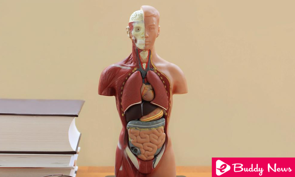 7 Main Body Parts That Are Not Strictly Necessary To Live ebuddynews
