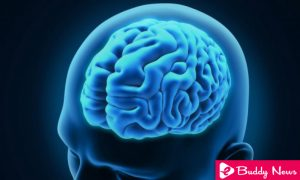 What Is Blood-Brain Barrier And How It Works ebuddynews